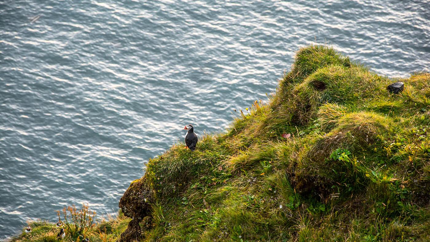 Maskonury, Południowa Islandia