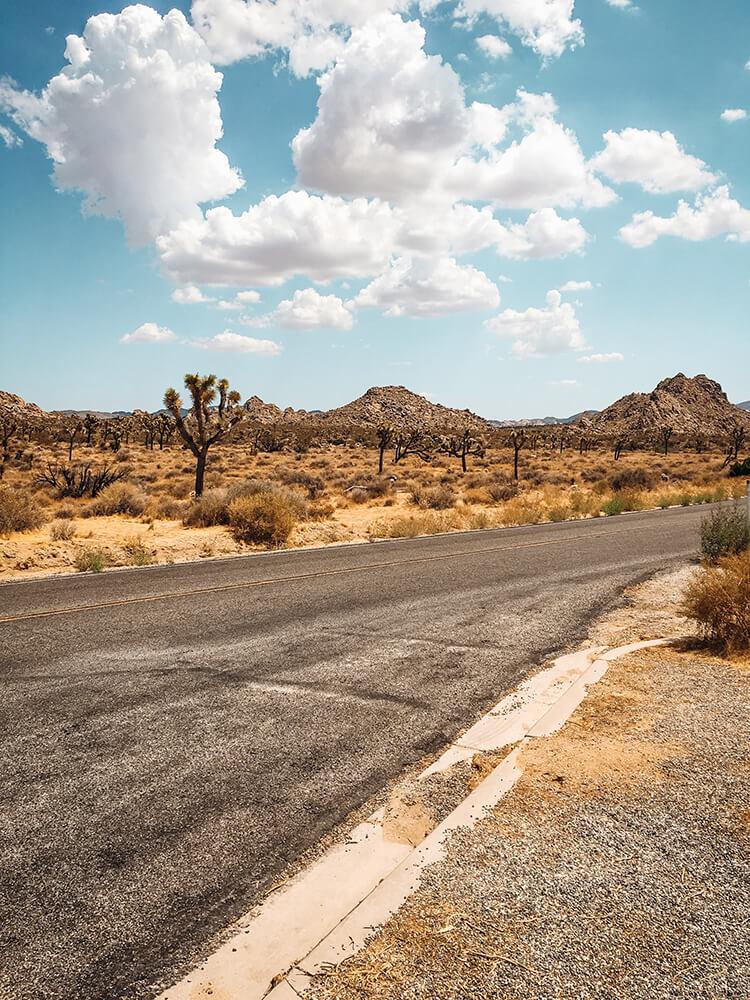 Desert Mojave