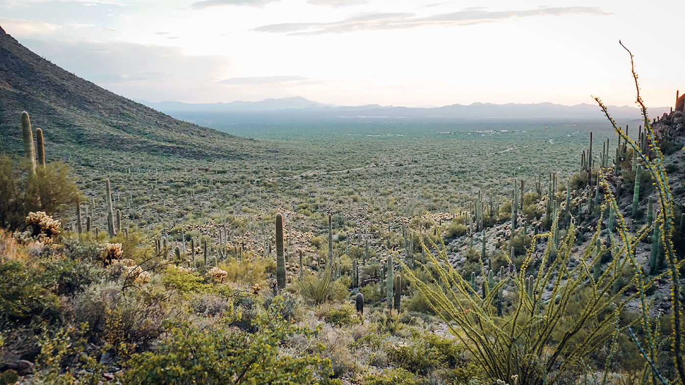 Pole kaktusów