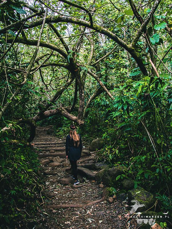 Manoa Falls - O'ahu