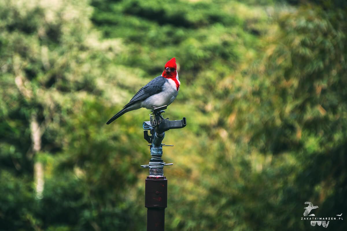 Waimea Falls Park - O'ahu